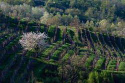 colline-conegliano-valdbobbiadene-paesaggio